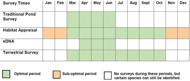 Great Crested Newt Survey calendar
