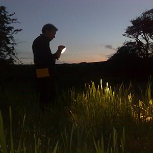 Amphibian torchlight survey