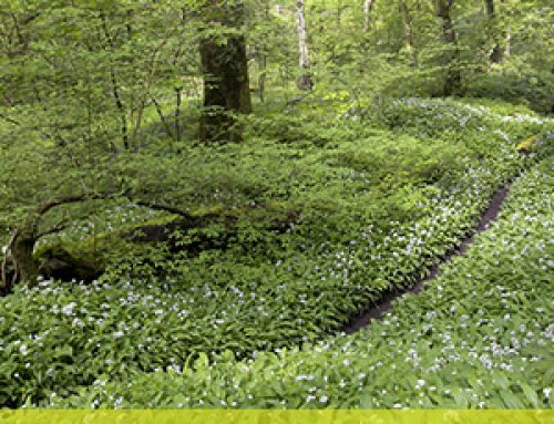 National Vegetation Classification