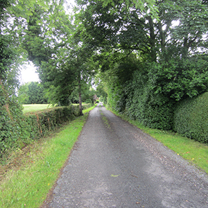 Typical country lane and hedgerow